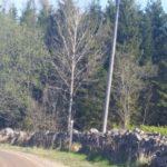 Pilgrimsled Hjo-Kungslena